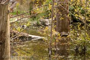 Errol Creek, Portland