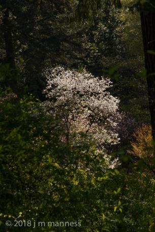 Hoyt_Arboretum-30432